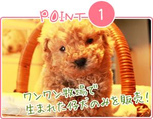 Point1 ワンワン牧場で生まれた仔犬のみを販売!