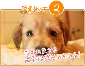 Point2 生まれたてや成長段階をみられる!