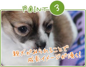 Point3 親犬がみられることで成長イメージが湧く!