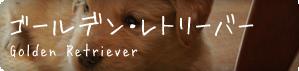 toriatsukai_dog-golden