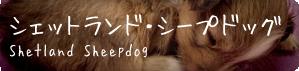 toriatsukai_dog-she